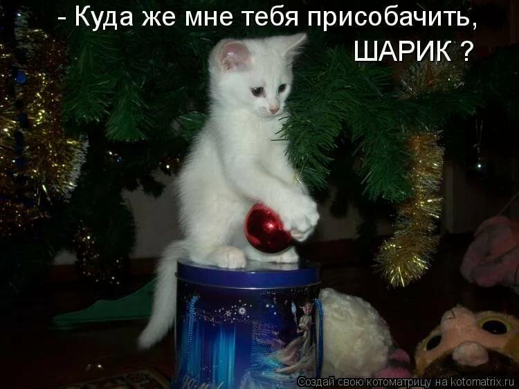 Новый год смешные картинки с животными с надписями