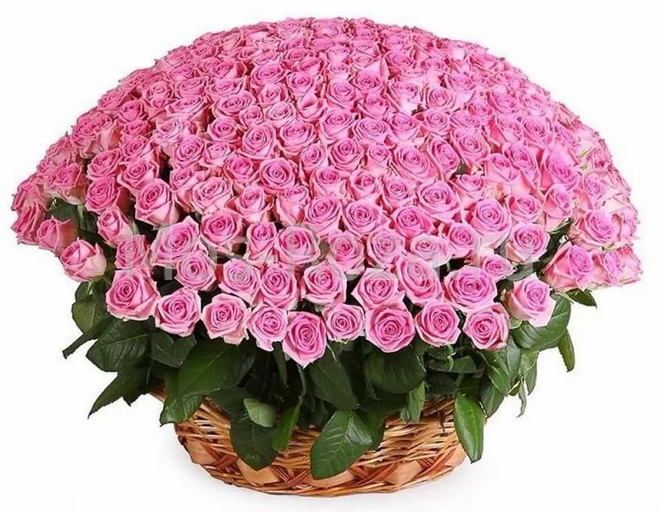 Цветы, открытки самые красивые букеты роз