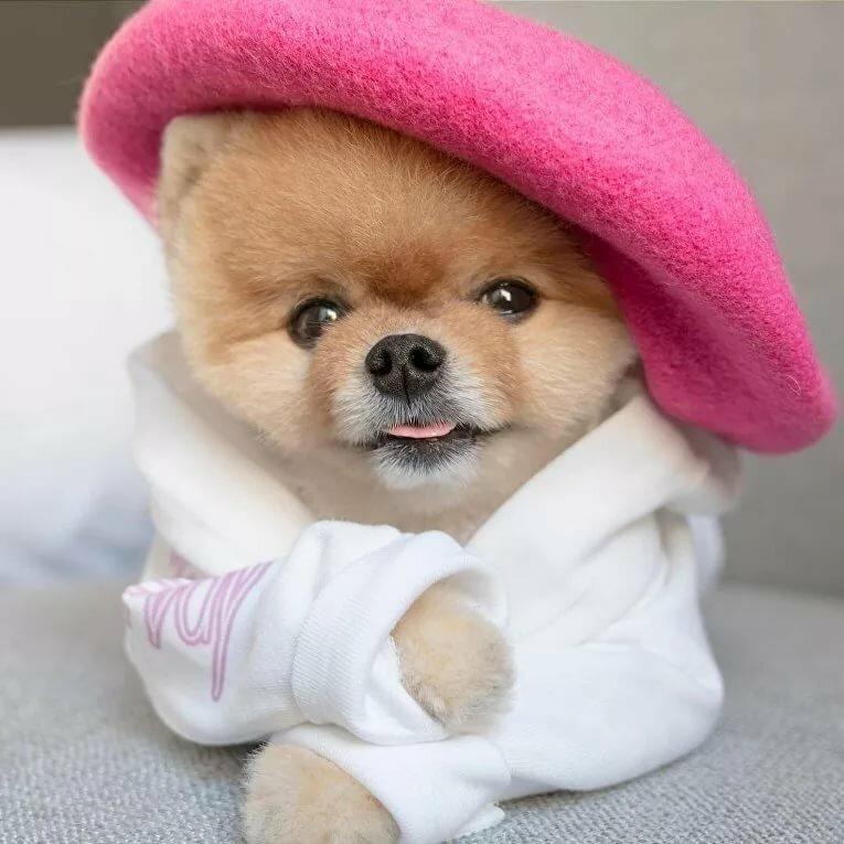 Самые популярные собаки в мире картинки