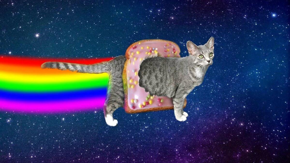 Картинки кот в радуге