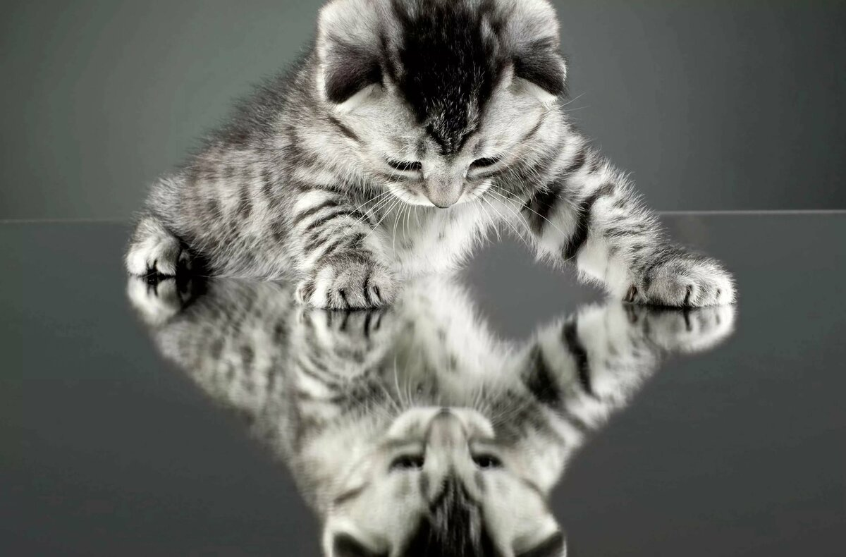 Прикольные черно белые картинки животные для, для