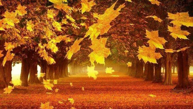 Картинка осень листопад анимация, новогодней открытке день