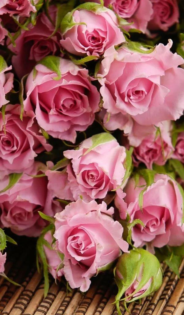 Розовые розы картинки красивые вертикальные