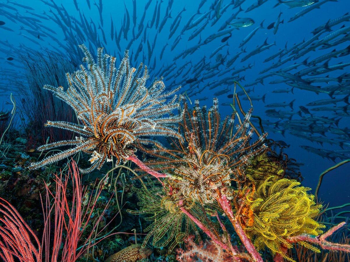 морские водоросли фото кто-кто, они-то
