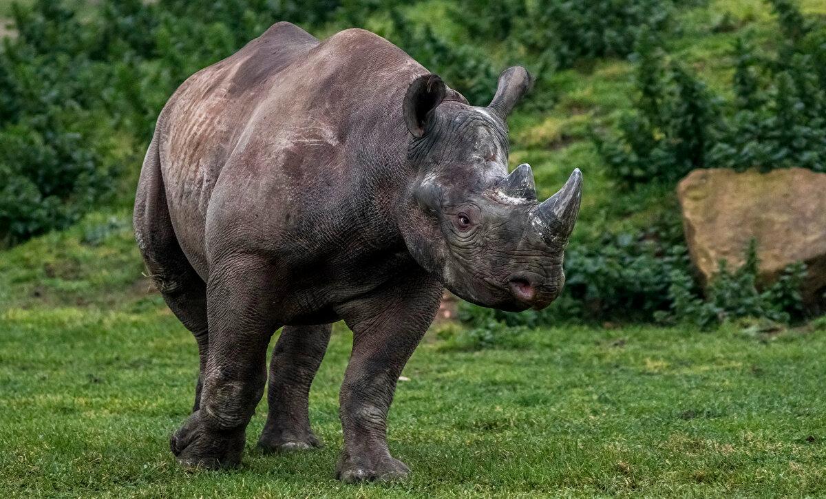время носорог в картинках период осеннего равноденствия