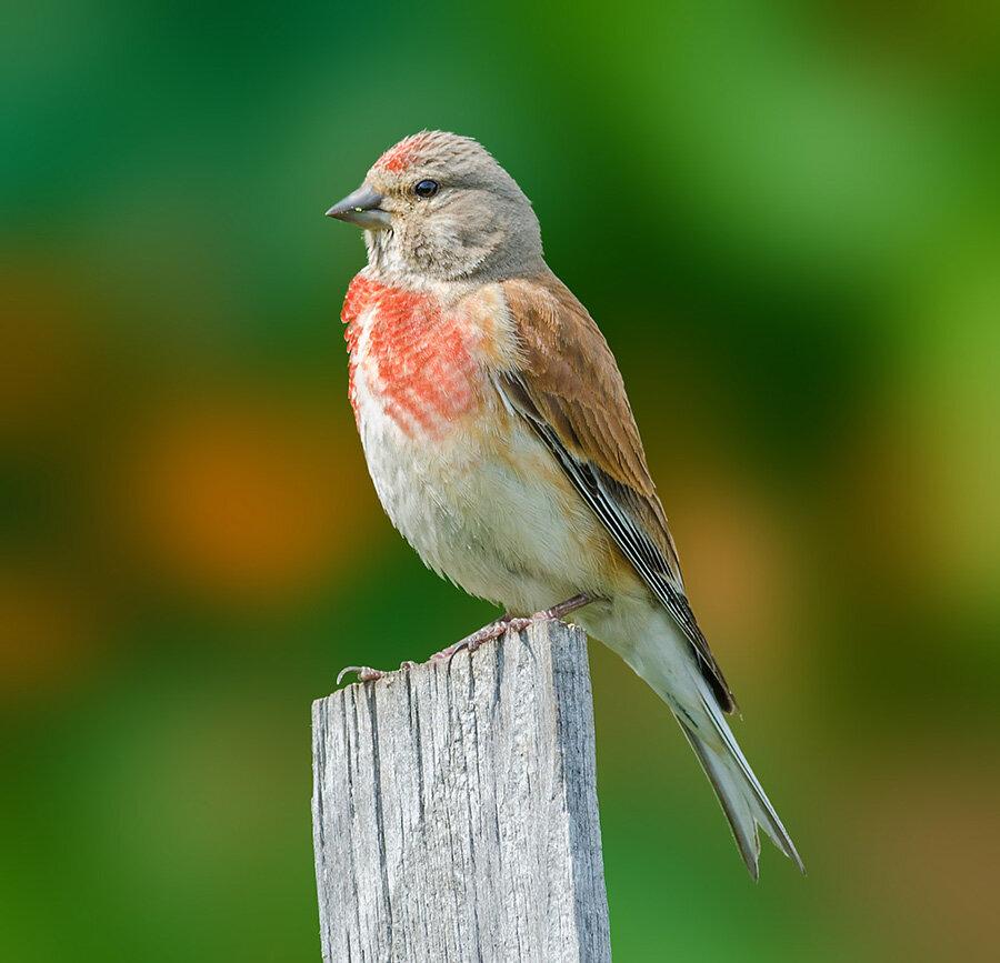 Корейка птица фото живая