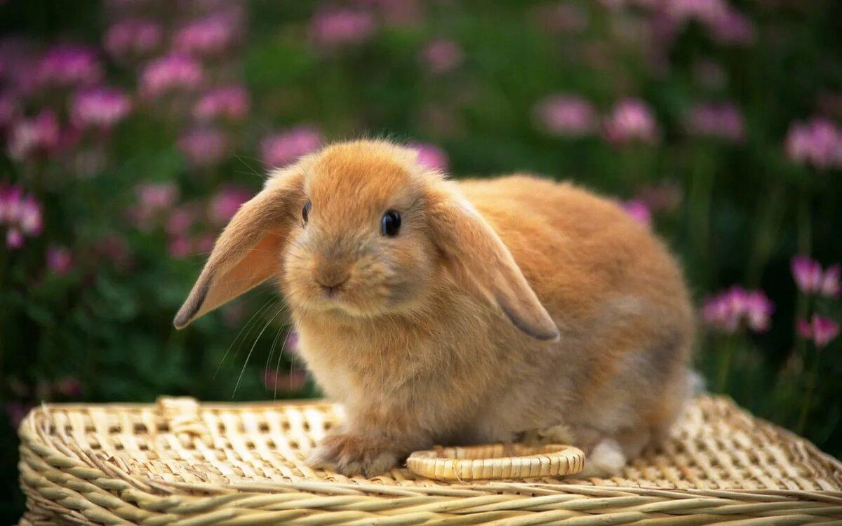 Кролики картинки фото, смешные про