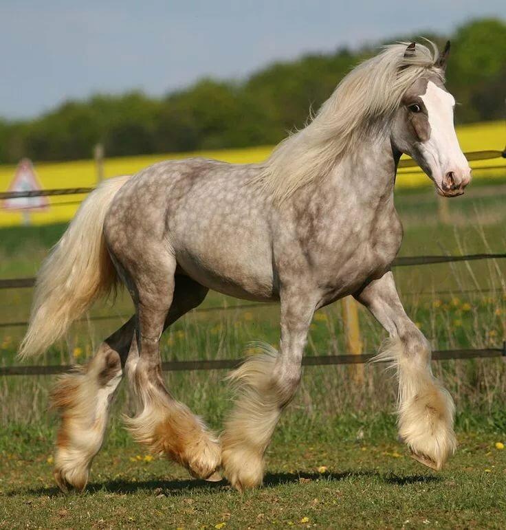 фотография кони в яблоках