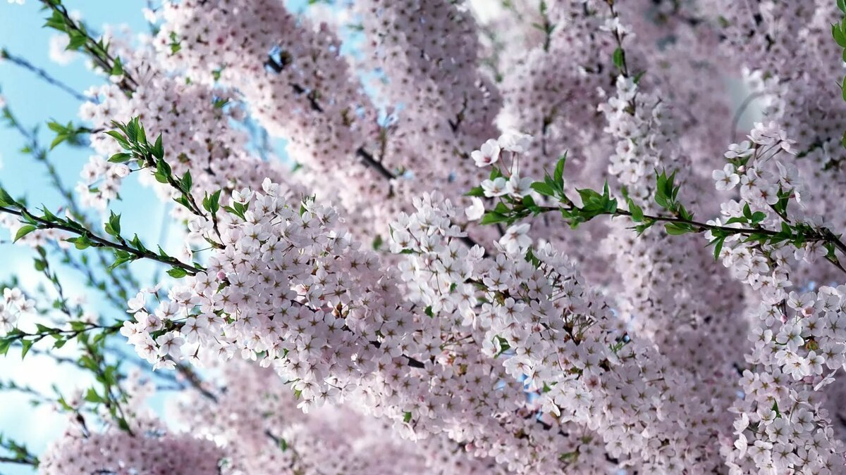 Под, красивые открытки весна природа