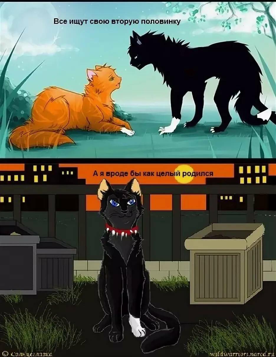 Приколы про котов воителей картинки