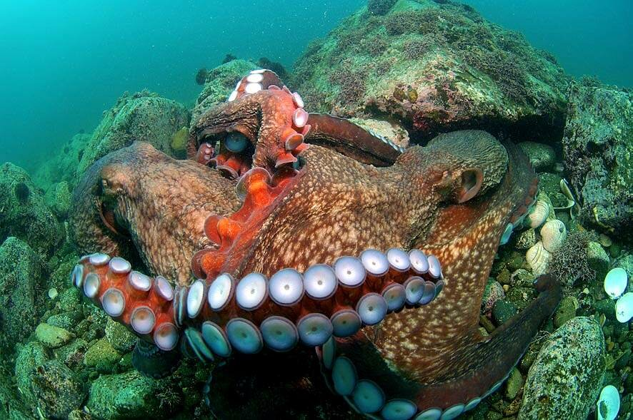 что обитатели тихого океана только картинки поможет запечатлить