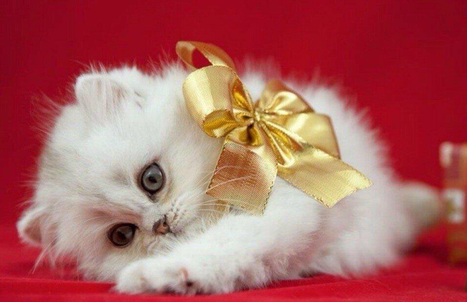 подарок картинки с котятами со стихами поролоновый матрас