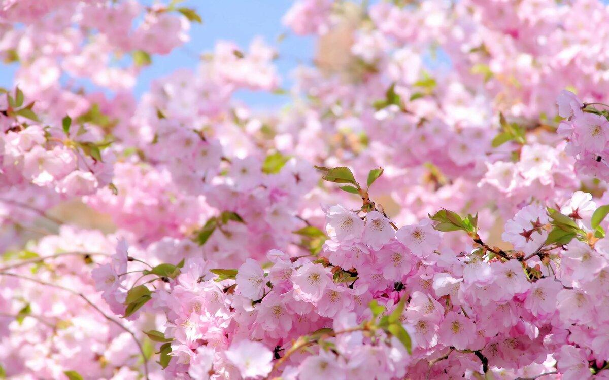 Картинки о весне на рабочий стол красивые, елка