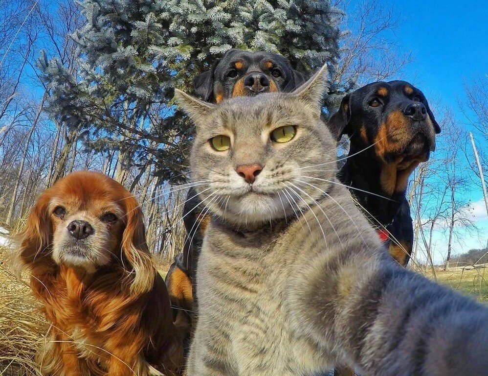 Смешные кошки и собаки картинки