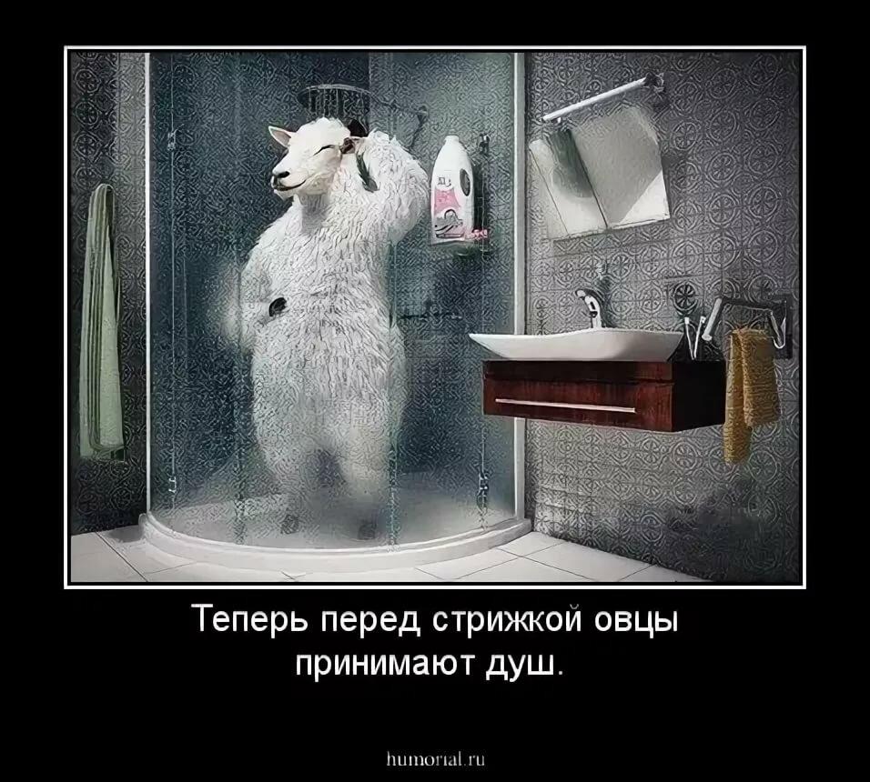 про душ демотиваторы что наша задача