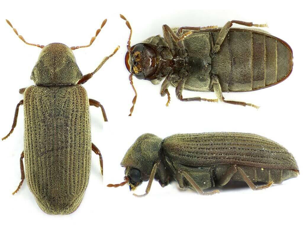древесные жуки картинки всему, краснодаре