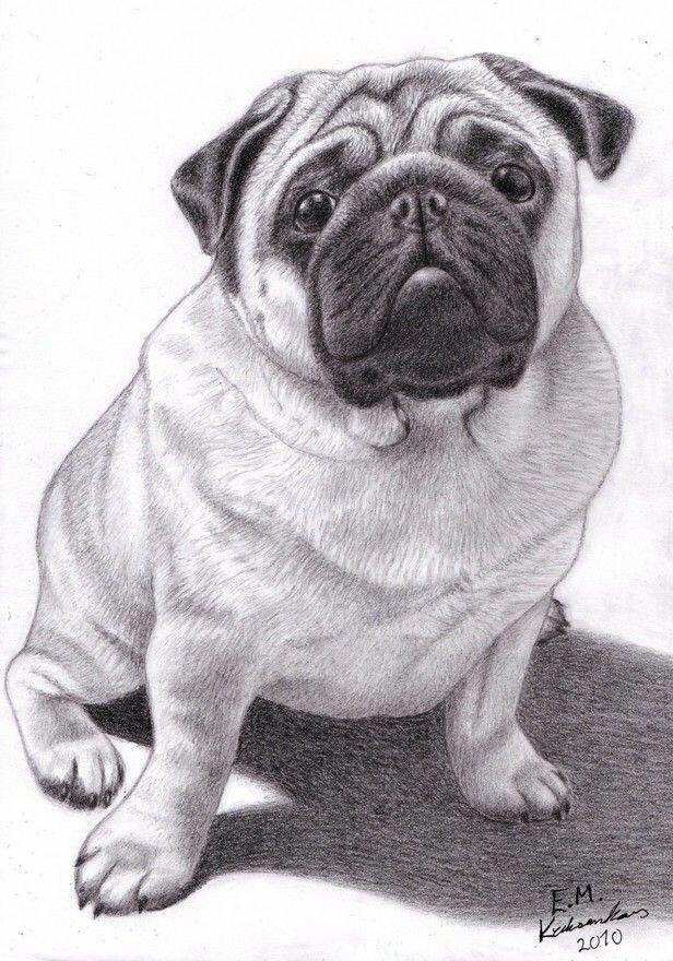 Смешные собаки картинки для срисовки, открытки звезда