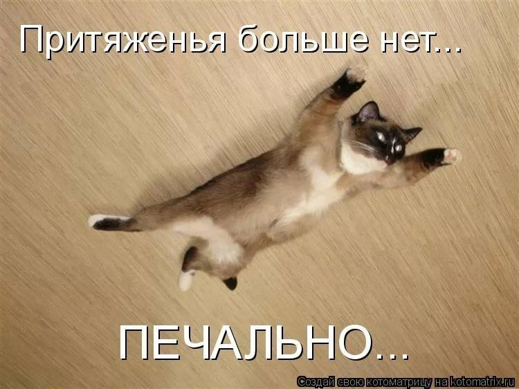 Картинки смешных котов с надписями до слез