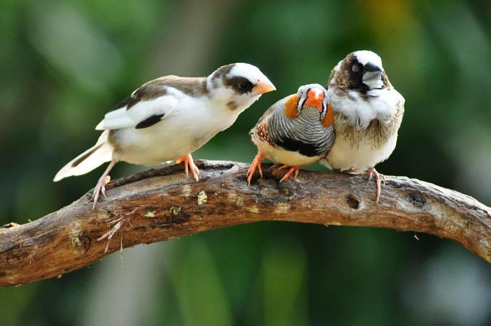 Картинки животных и птиц веселые, новогодние