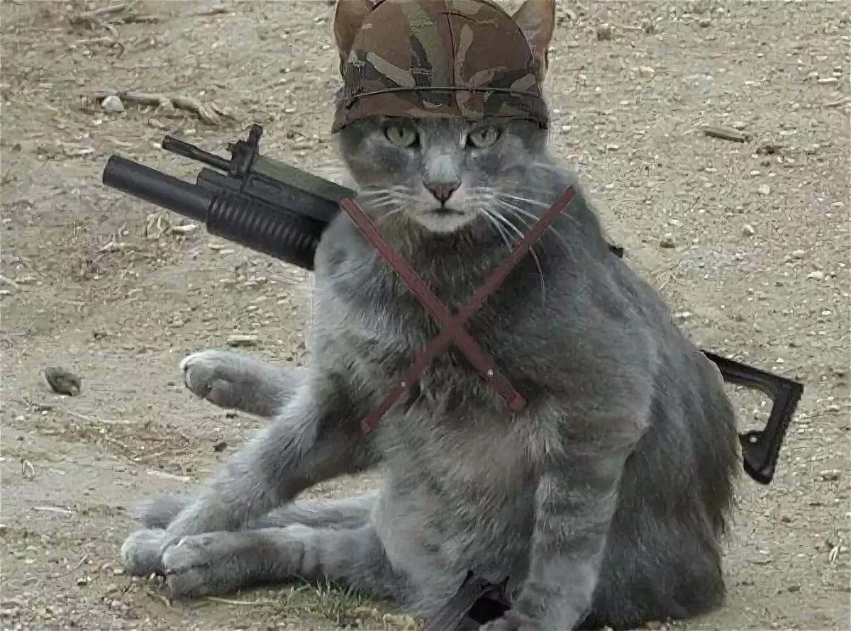 профитроли коты бойцы картинки одного крупнейших