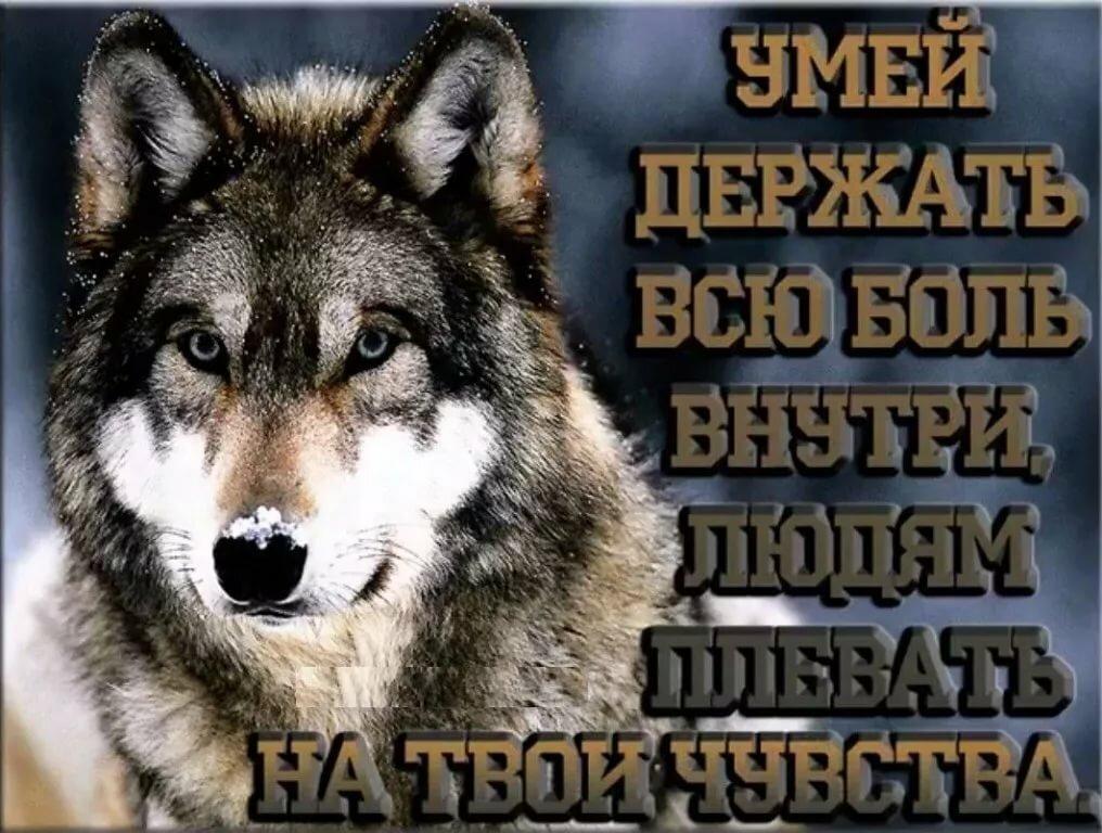 Фото волка с надписью, открытки пожеланиями