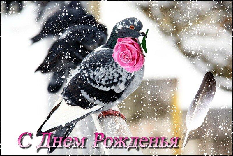 Поздравление с днем рождения зимние картинка