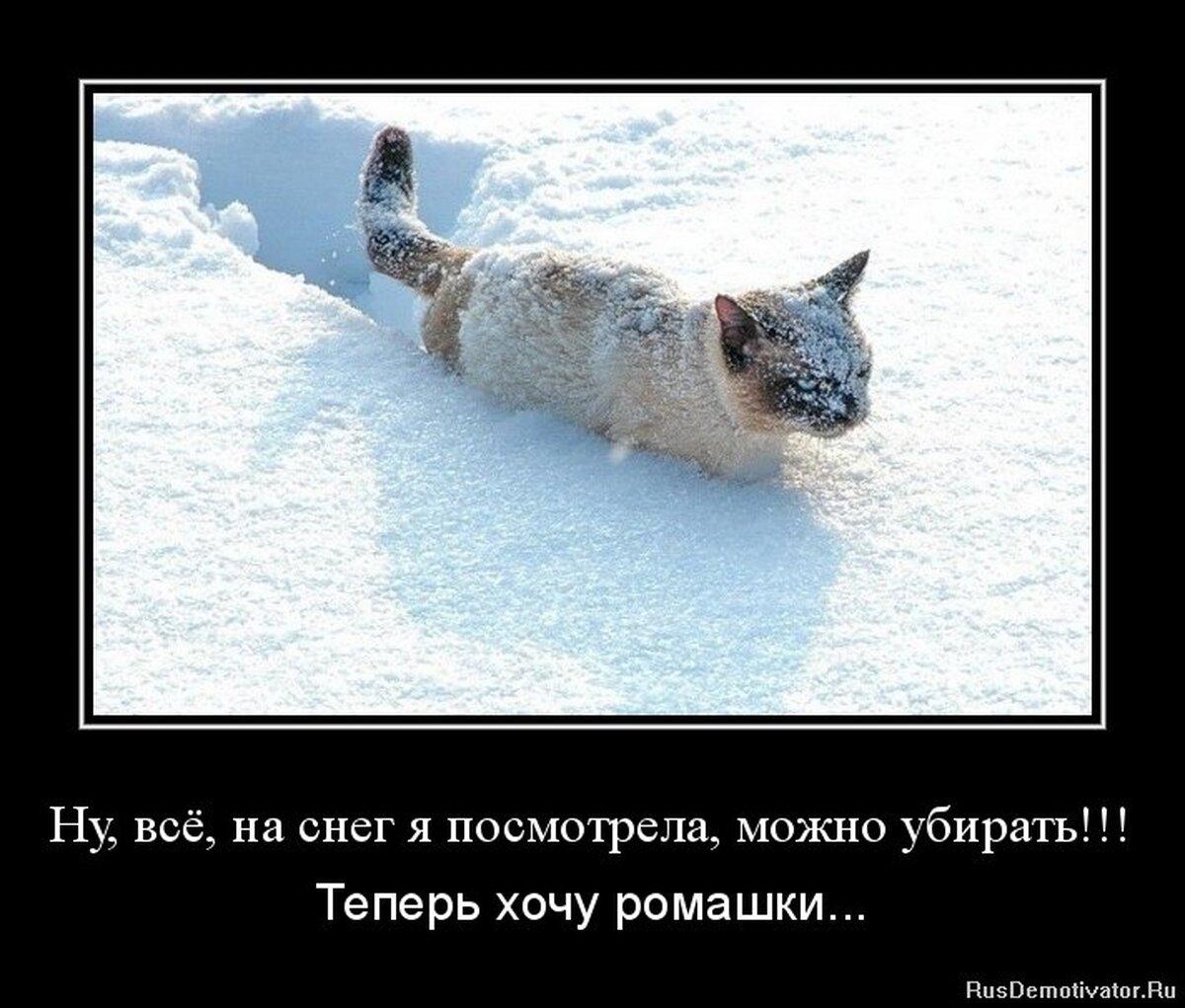 Зимние фото демотиваторы