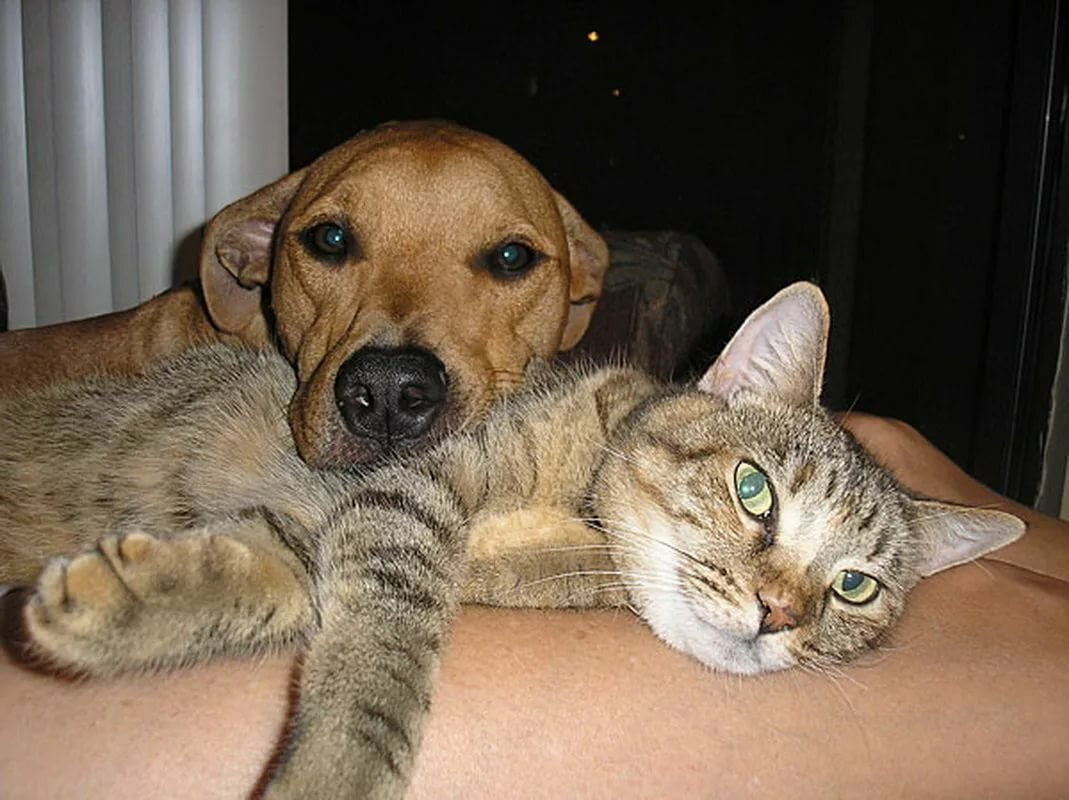 Прикольные картинки с собачками и кошками, для любимых