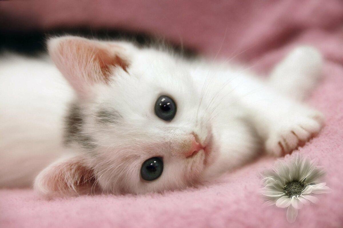 Добрым утром, картинки привет котенок