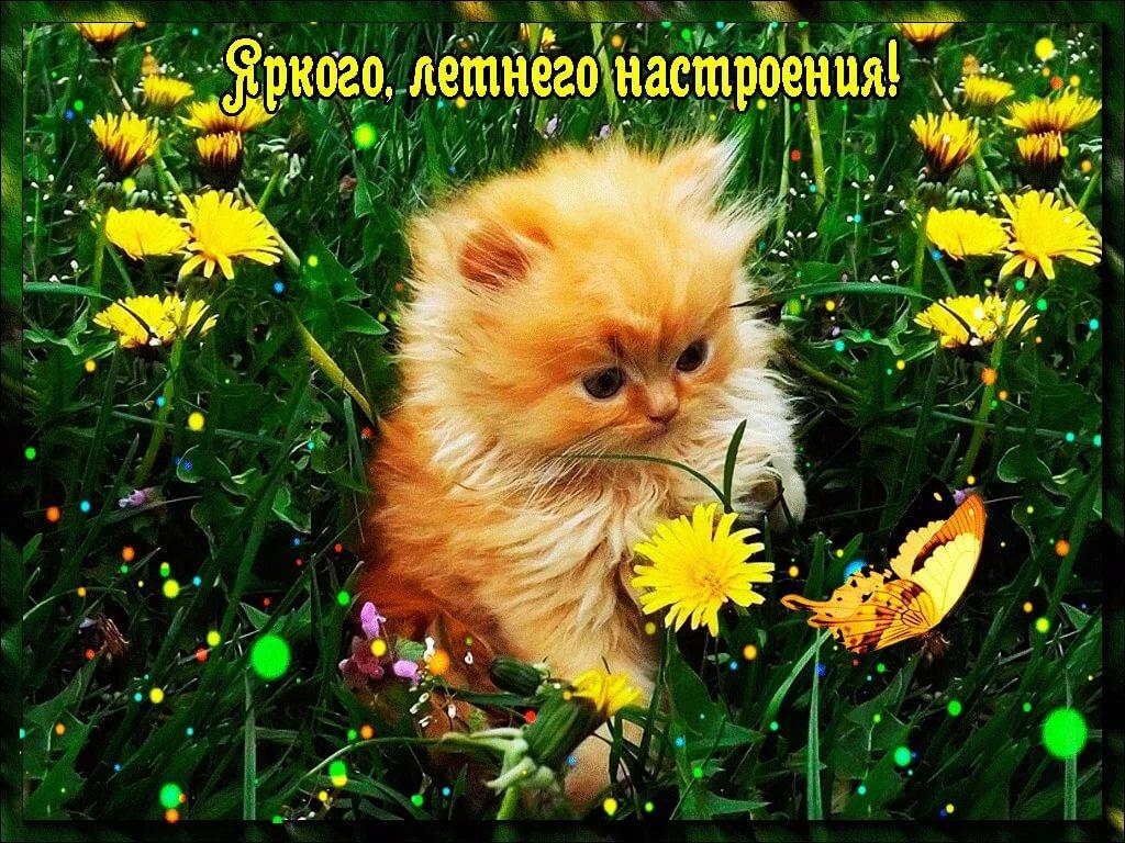 открытки для настроения прикольные фото капустой вареники