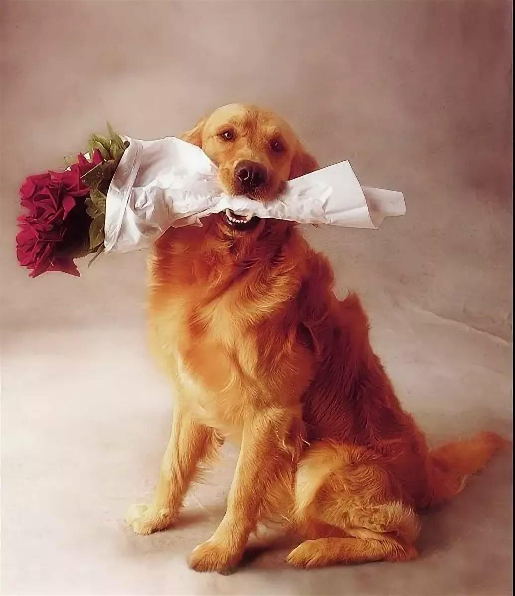 Открытки с днем рождения собаки картинки