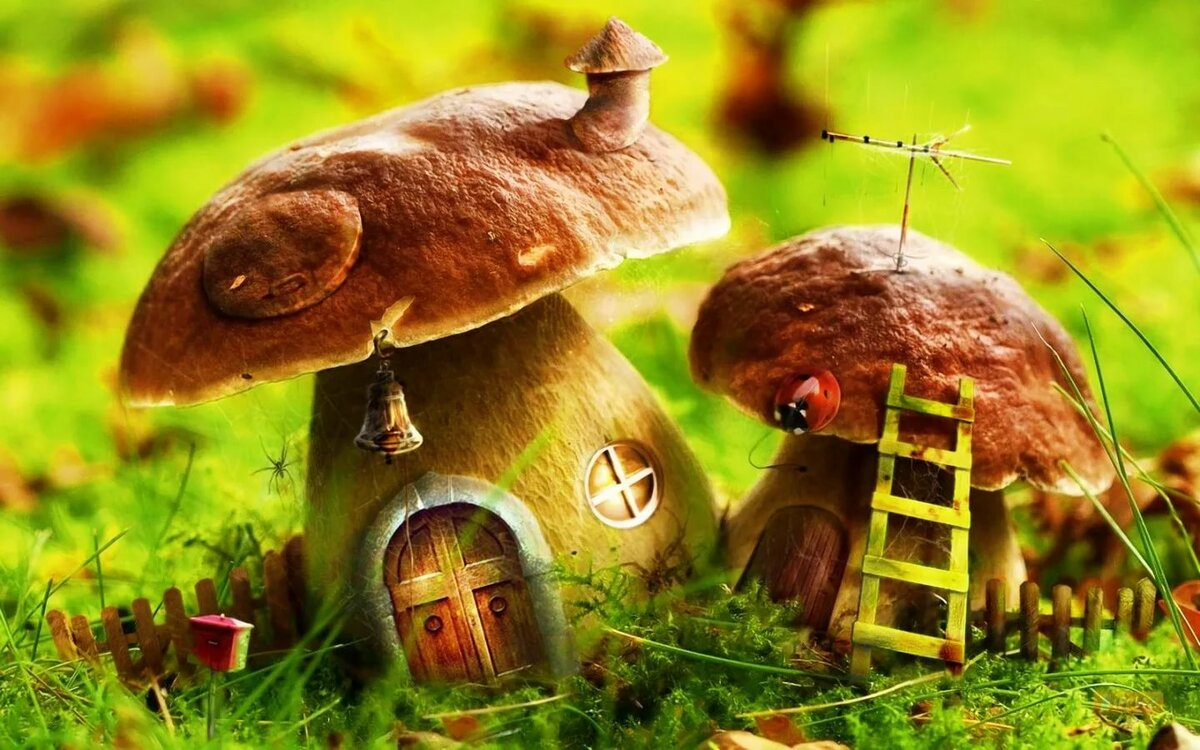 Фон грибы в лесу