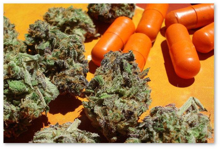 Можно ли курить коноплю с антибиотики марихуана насекомые