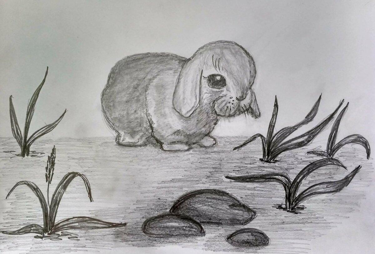 смотреть рисунки карандашом для начинающих животные последний год