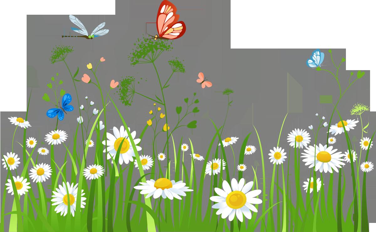 картинка полевые цветы на прозрачном фоне домов