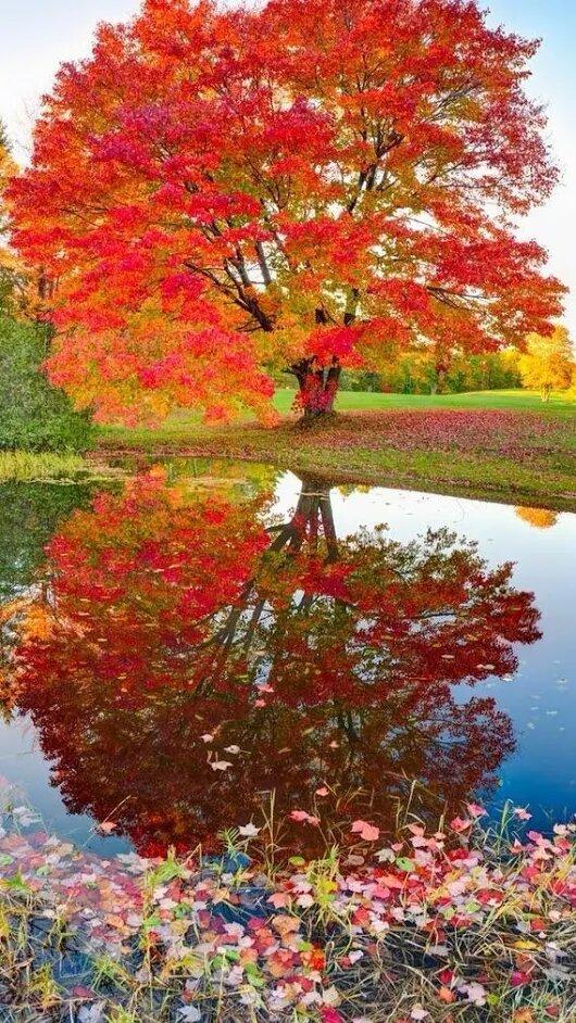 Картинки с природой осени вертикальные, поздравление для
