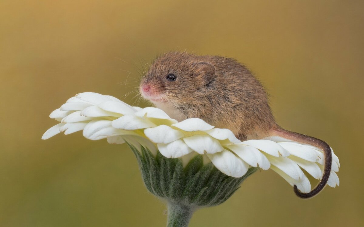 Картинки с мышками, очень красивые днем