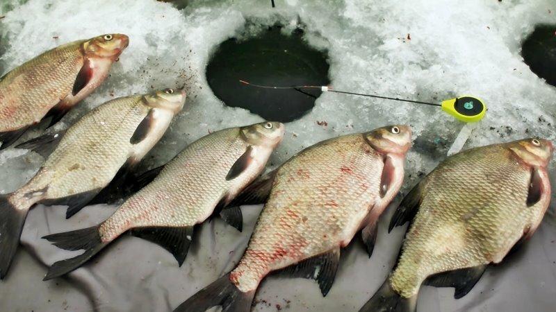 Смотреть зимнею рыбалку на леща