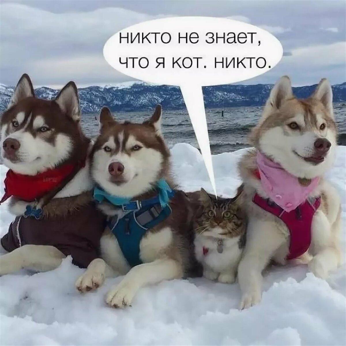 Новые картинки с надписями вконтакте, душе картинки
