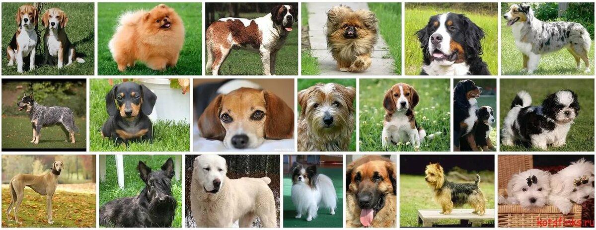 Картинки собак с названиями пород