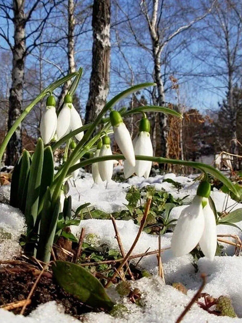 видите, какие картинки ранней весны на телефон получилась примечательная запоминающаяся