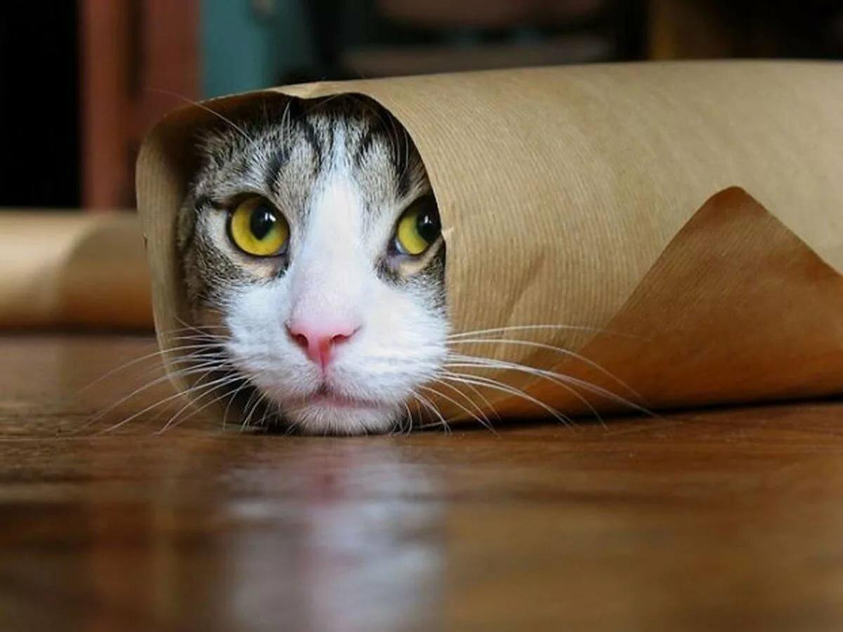 Смешные картинки про кошек новые