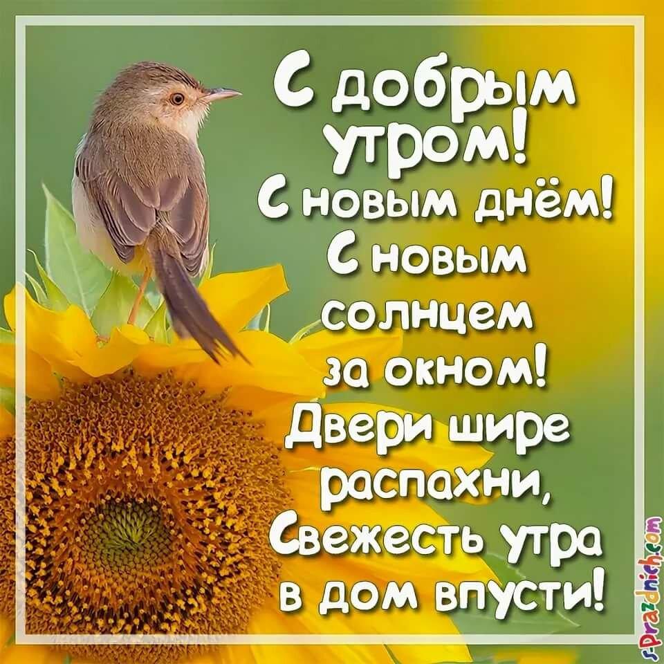 Пожелания с добрым утром в стихах и в открытках