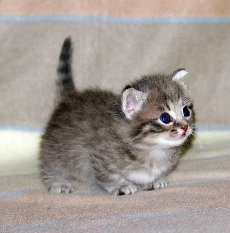 мини фотки котят ветка сирени