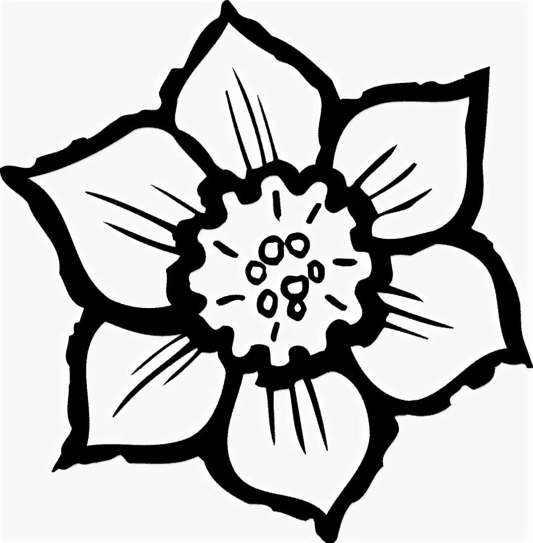 Черный цветок картинка для детей