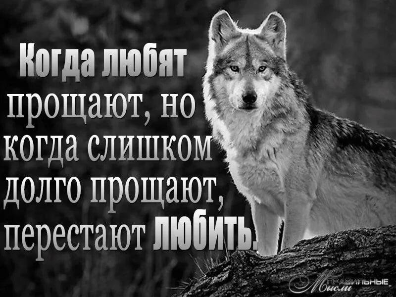 Статусы с картинками волков про жизнь