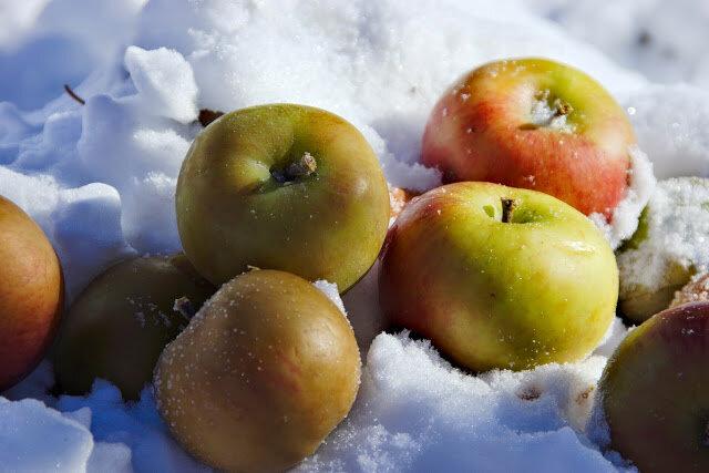 картинка анимация яблоки на снегу нравиться заводчикам