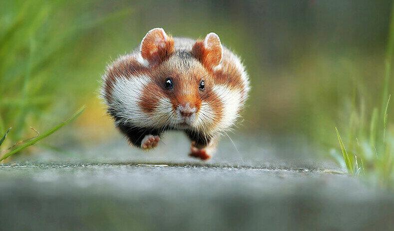 Забавные картинки с животными для поднятия
