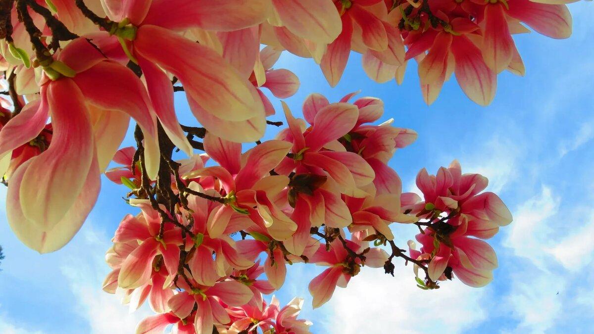 Весна красивые картинки на телефон