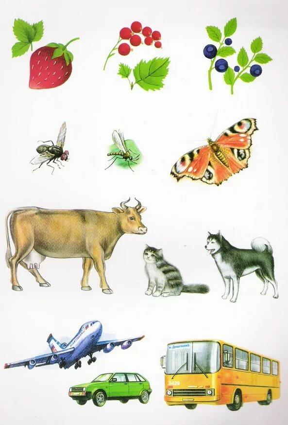 Дидактические картинки логопедия